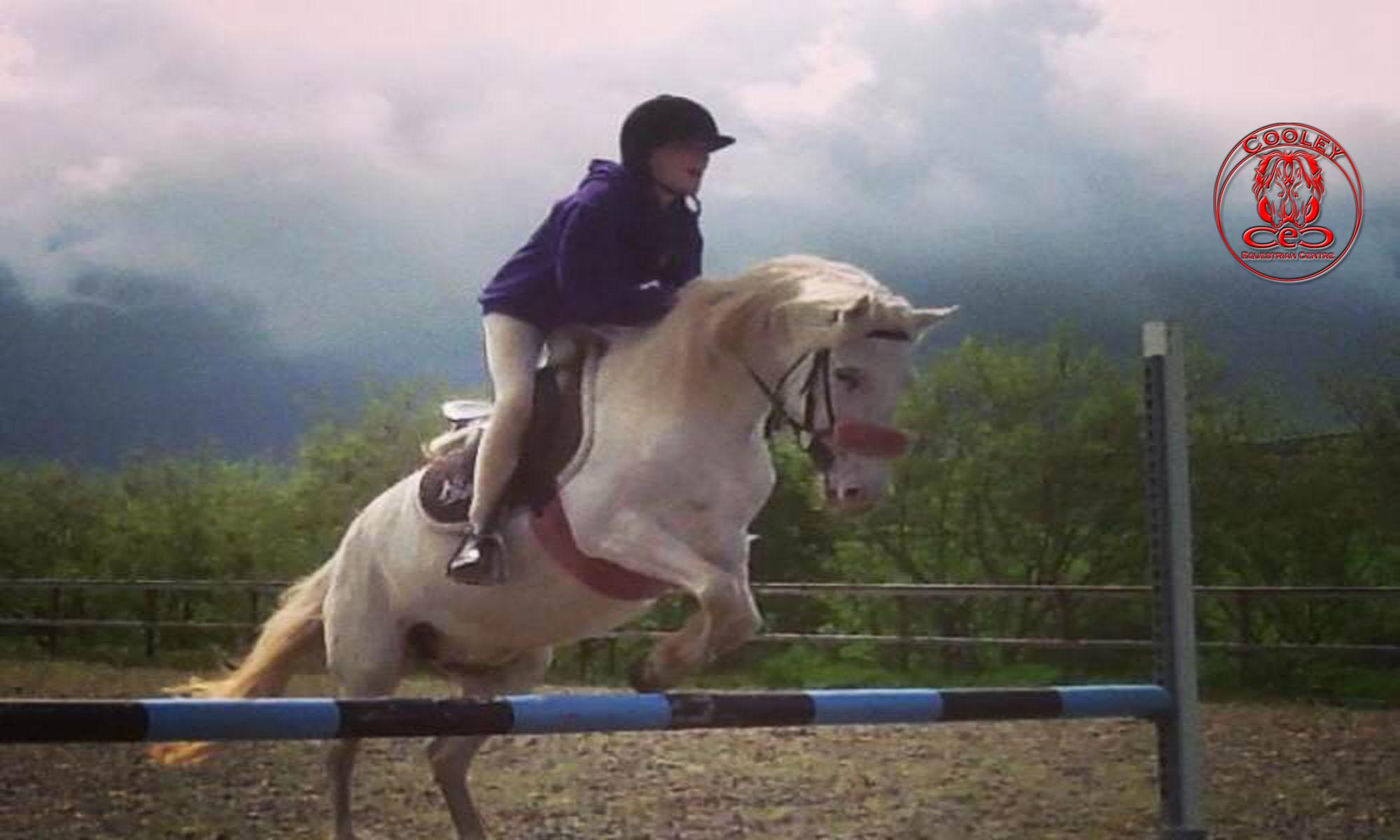 Cooley Equestrian Centre